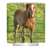 Horses In Field Near Ballyvaloo Shower Curtain