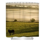 Horses In The Morning Mist, North Shower Curtain