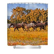 Horses Running Free Shower Curtain