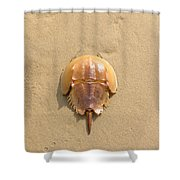 Horseshoe Crab In The Sand Campground Beach Cape Cod Eastham Ma Shower Curtain