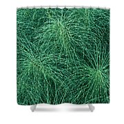 Horsetail Fern Shower Curtain