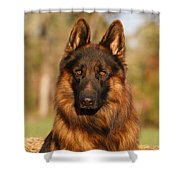 Hoss In Autumn Shower Curtain