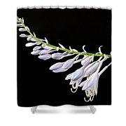 Hosta Flowers Shower Curtain