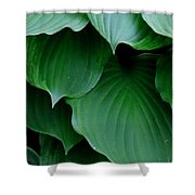 Hosta Green Shower Curtain