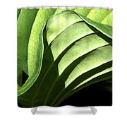 Hosta Leaf Shower Curtain