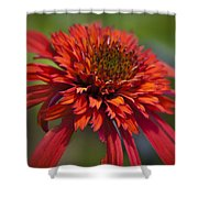 Hot Papaya Hybrid Coneflower Shower Curtain