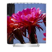 Hot Pink Cactus Flowers Shower Curtain