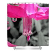 Hot Pink Cactus Shower Curtain by Kaye Menner