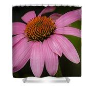 Hot Pink Coneflower Shower Curtain