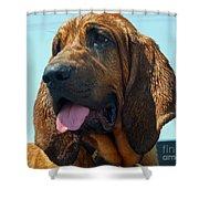 Hound Dog Shower Curtain