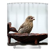 House Finch Eating Jelly Shower Curtain