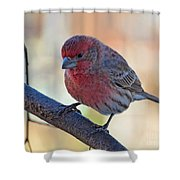 Housefinch IIi Shower Curtain