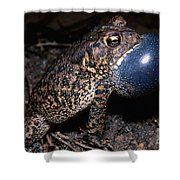 Houston Toad Shower Curtain