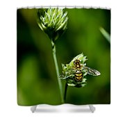 Hoverfly On Grass Shower Curtain