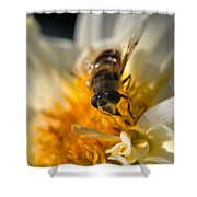 Hoverfly On White Flower Shower Curtain