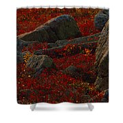 Huckleberry Bushes And Multi-hued Shower Curtain