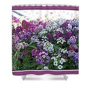 Hues Of Purple Phlox Shower Curtain