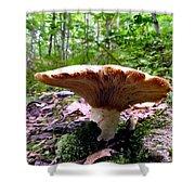Huge White Wild Mushroom Shower Curtain