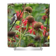 Hummer At Rest Shower Curtain