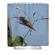 Hummer Shower Curtain