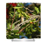 Hummer Hang-out Shower Curtain