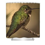 Humming Bird On Branch Shower Curtain
