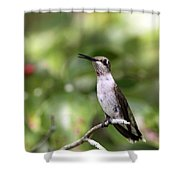 Hummingbird - Berries Shower Curtain