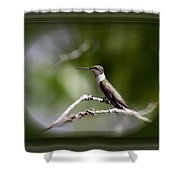 Hummingbird - Bird Shower Curtain