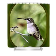 Hummingbird - Gold And Green Shower Curtain
