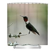 Hummingbird - Just The Tip Shower Curtain