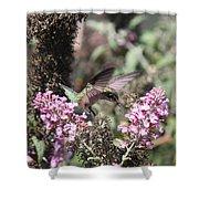 Hummingbird - Ruby-throated Hummingbird - Chopper Shower Curtain