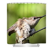 Hummingbird - Ruby-throated Hummingbird - Stretch Time Shower Curtain