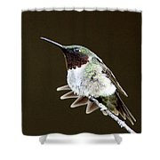 Hummingbird - Wide Tail Shower Curtain