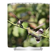 Hummingbird - You Have Done It Now Shower Curtain