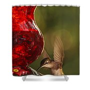 Hummingbird At The Feeder Shower Curtain