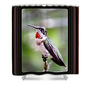 Hummingbird Card Shower Curtain