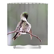 Hummingbird - Cleaning Up Shower Curtain