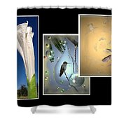 Hummingbird Collage 2009 Shower Curtain