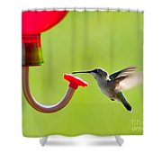 Hummingbird Drinking Shower Curtain