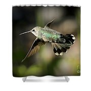 Hummingbird Fly By Shower Curtain