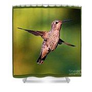 Hummingbird Hello Shower Curtain