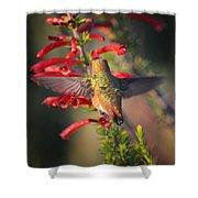 Hummingbird In Flight 1 Shower Curtain