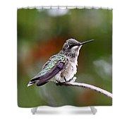 Hummingbird - Little Friend Shower Curtain