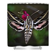 Hummingbird Moth - White-lined Sphinx Moth Shower Curtain