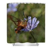 Hummingbird Or Clearwing Moth Din137 Shower Curtain