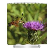 Hummingbird Or Clearwing Moth Din141 Shower Curtain