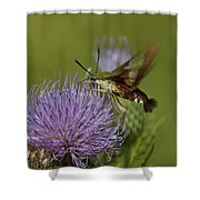 Hummingbird Or Clearwing Moth Din178 Shower Curtain