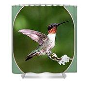 Hummingbird Photo - Light Green Shower Curtain
