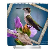 Hummingbird Picture Pretty Shower Curtain