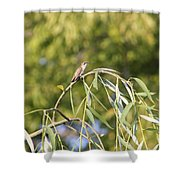 Hummingbird Resting In The Willow Shower Curtain